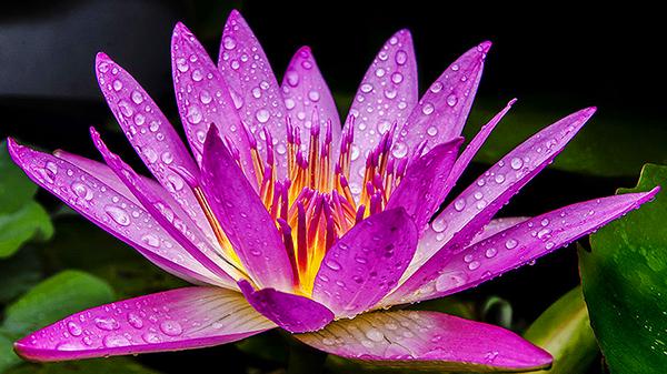 一暄康养经验分享——适合老年人种植的花草推荐:睡莲