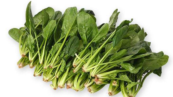 成都养老院冬时令蔬菜推荐——菠菜