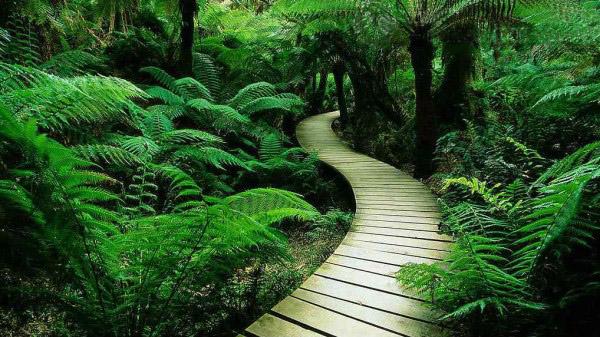 热带森林公园 (2)