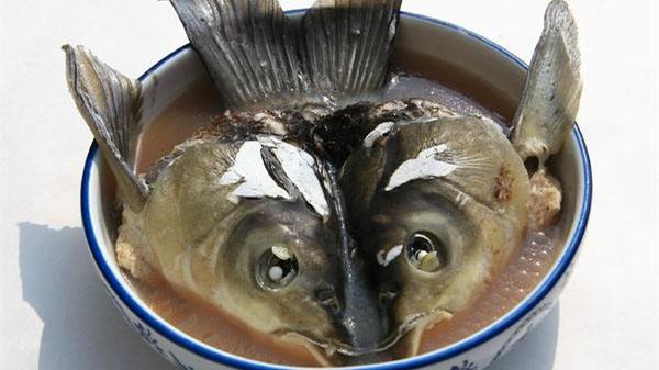 成都养老院一暄康养为您推荐五种营养价值高的鱼类(二)