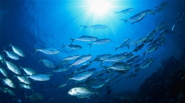 成都好的养老院一暄康养为您揭晓深海鱼的8大营养(一)