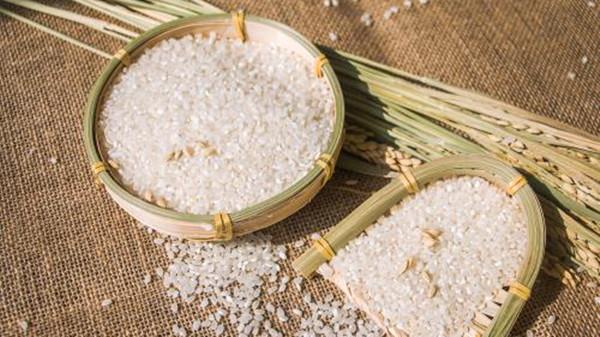 成都养老院一暄康养教您如何挑选优质又美味的大米(二)1
