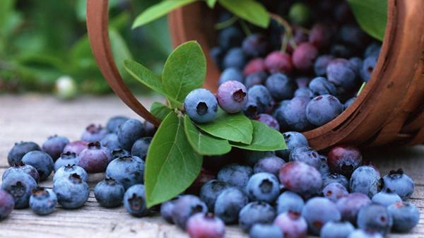 成都养老院一暄康养分享一种夏季水果——蓝莓(三)1