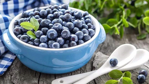 成都养老院一暄康养分享一种夏季水果——蓝莓(一)2
