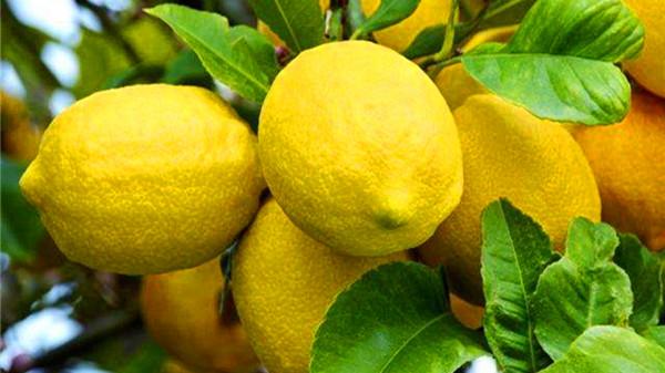 成都青羊区养老院-一暄康养推荐喉咙痛喉咙发炎怎么办(一)-柠檬2