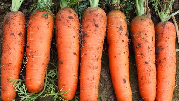 成都金牛区养老院一暄康养分享食材大百科-胡萝卜1