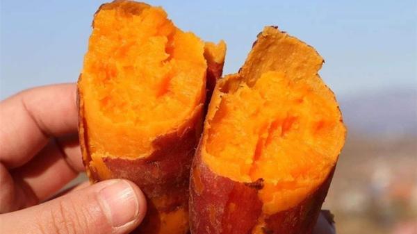 成都养老院一暄康养介绍老人冬季养生之饮食篇-番薯