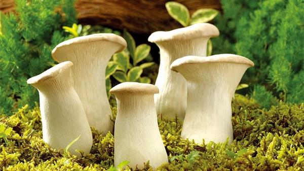 成都青羊区养老院-一暄康养推荐老年人的营养食谱-蘑菇1-封面