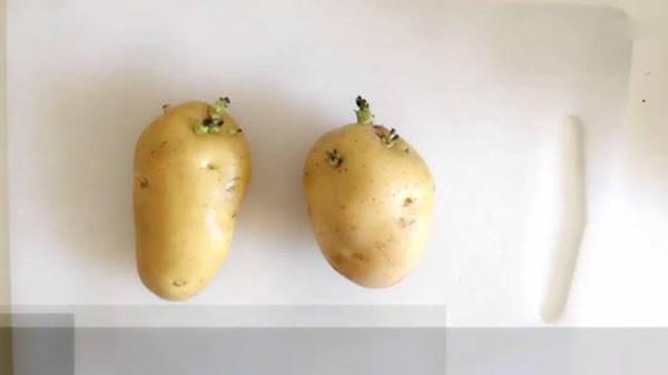 成都西三环的高端养老院一暄康养告诉你发芽的食物能不能吃? 2