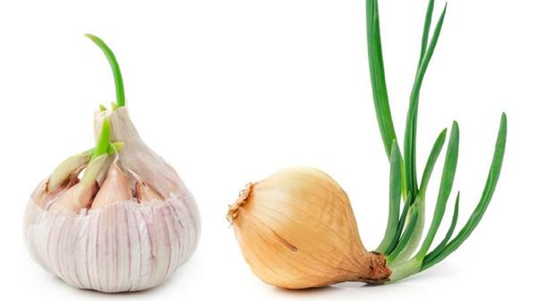 成都西三环的高端养老院一暄康养告诉你发芽的食物能不能吃3-2