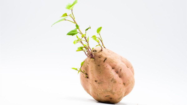 成都西三环的高端养老院一暄康养告诉你发芽的食物能不能吃? 2-3