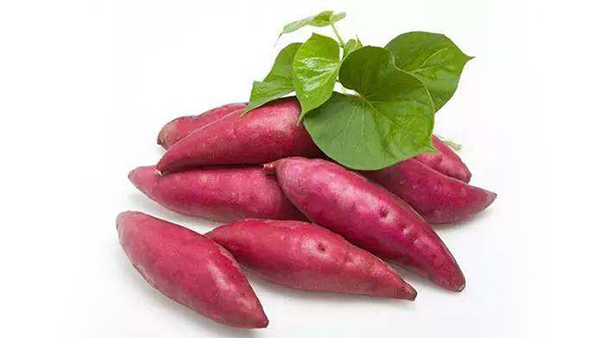 成都养老院冬时令蔬菜推荐——红薯