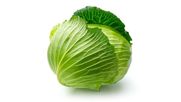 成都养老院冬时令蔬菜推荐——卷心菜