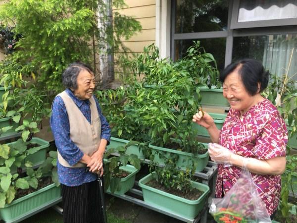 成都养老院|雨过天晴,一暄康养开心农场大丰收|奶奶们开怀大笑