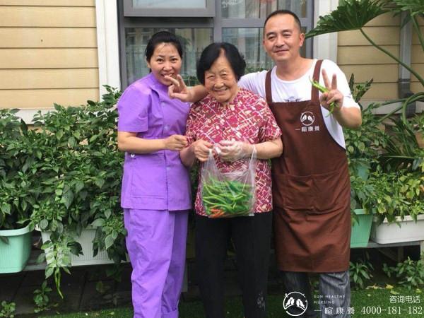成都养老院|雨过天晴,一暄康养开心农场大丰收|照护师和理疗师与奶奶一起采摘