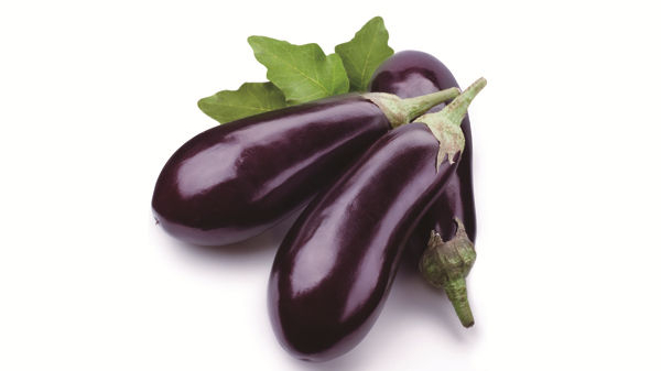 成都养老院夏季时令蔬菜推荐——茄子