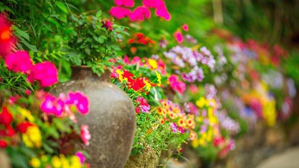 成都高端养老院一暄康养经验分享——种花种草对维持老年人身心健康好处多-插图1