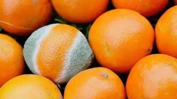 成都养老院一暄康养提醒大家烂水果不要吃-烂水果2
