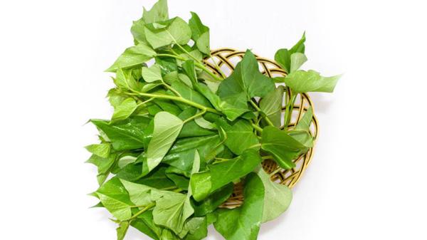 成都养老院夏季时令蔬菜推荐——地瓜叶