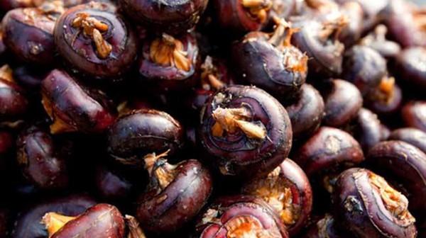 成都养老院一暄康养提醒胃寒不能吃的水果(4)-荸荠
