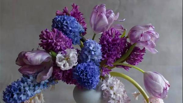 金牛区中高档养老院一暄康养西门分院经验分享,适合春季种植的花草推荐之一:风信子(下)1