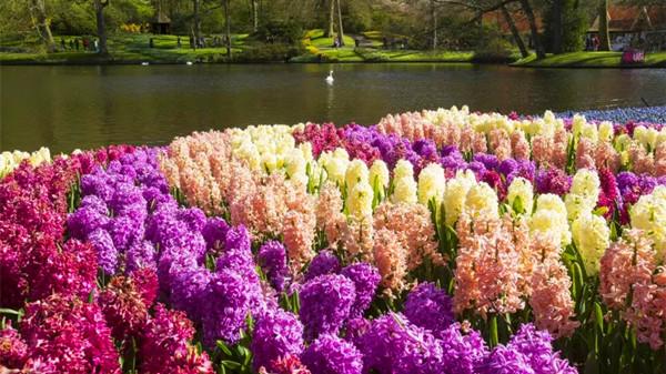金牛区中高档养老院一暄康养西门分院经验分享,适合春季种植的花草推荐之一:风信子(下)3