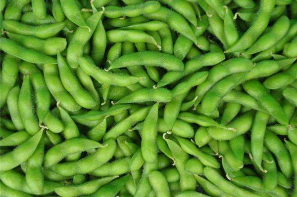 成都青羊区养老院-一暄康养推荐老年人糖尿病吃什么蔬菜可以降脂降糖(2)-毛豆4