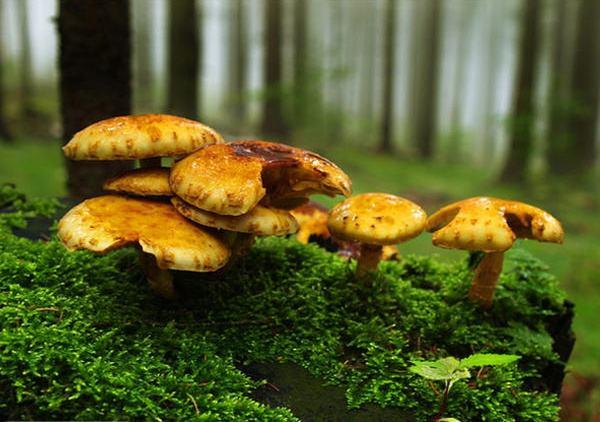 成都青羊区养老院-一暄康养推荐老年人糖尿病吃什么蔬菜可以降脂降糖(2)-蘑菇5