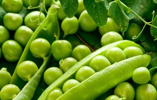 成都青羊区养老院-一暄康养推荐老年人糖尿病吃什么蔬菜可以降脂降糖(3)-豌豆5