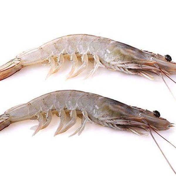成都青羊区养老院-一暄康养介绍吃虾的禁忌人群-虾2