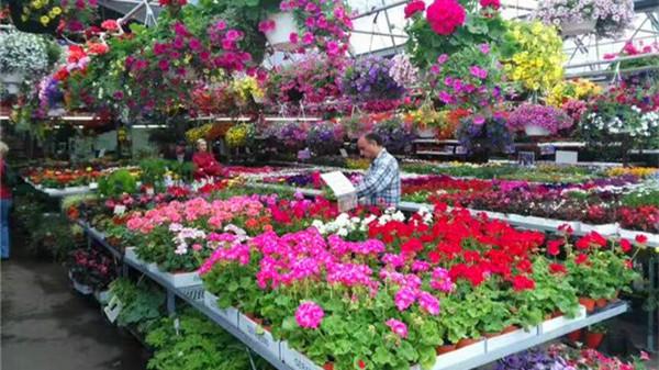 毗邻高新西区的高端老人院一暄康养西门分院为您分享:春季种花养护方法(四)如何防治病虫害