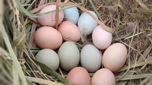 成都养老院一暄康养提醒吃鸡蛋应该小心的事(3)-鸡蛋2
