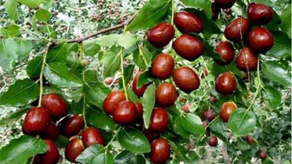 成都养老院一暄康养提醒9种水果可以肝脏护理(3)-西瓜1