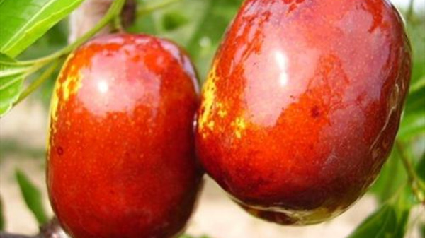 成都养老院一暄康养提醒9种水果可以肝脏护理(3)-西瓜2