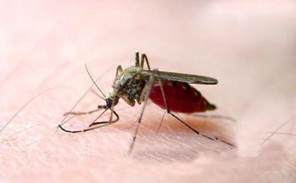 成都养老经验:老年人夏季防蚊虫