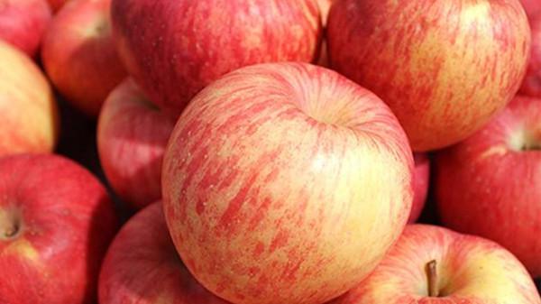 成都养老院一暄康养为您揭晓世界公认的10个长寿食品 上篇-苹果