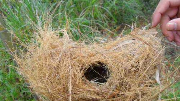 (二)成都私人豪华老人院一暄康养今天教您繁殖虎皮鹦鹉不要用这种鸟窝3