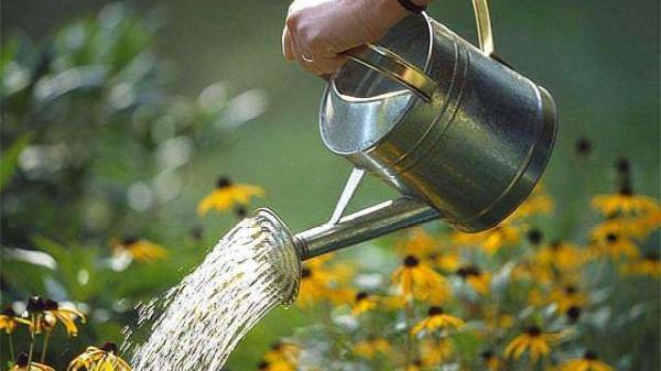 成都养老院一暄康养为您分享:春季种花养护方法(一)如何正确浇水