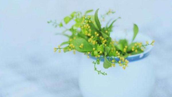 成都高端养老院一暄康养经验分享——适合老年人种植的花草推荐:米兰2