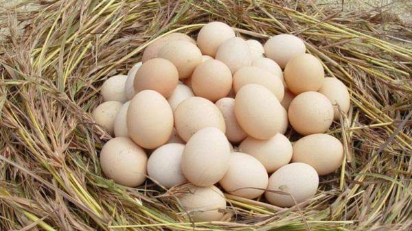 【成都养老院一暄康养】切记!鸡蛋不能和这些食物一起吃!
