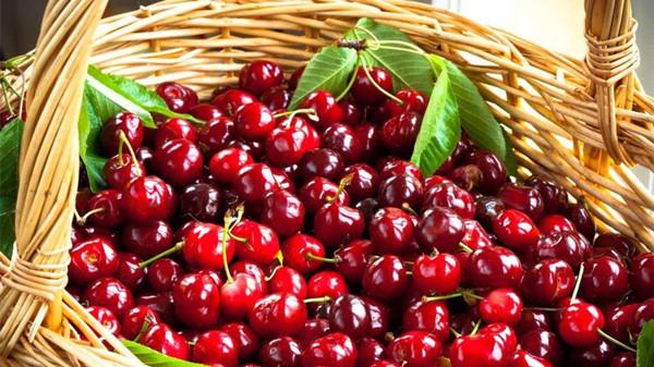 成都养老院经验分享:冬季吃对这8种水果,肌肤越变越水润(下)-樱桃