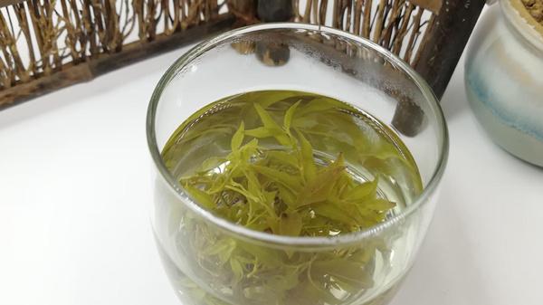 成都好的养老院分享健康养生-藤茶4