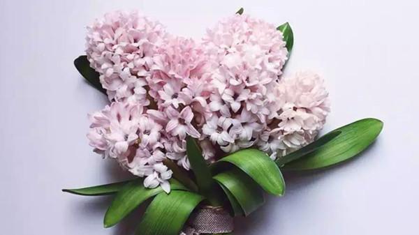 金牛区中高档养老院一暄康养西门分院经验分享,适合春季种植的花草推荐之一:风信子(上)1