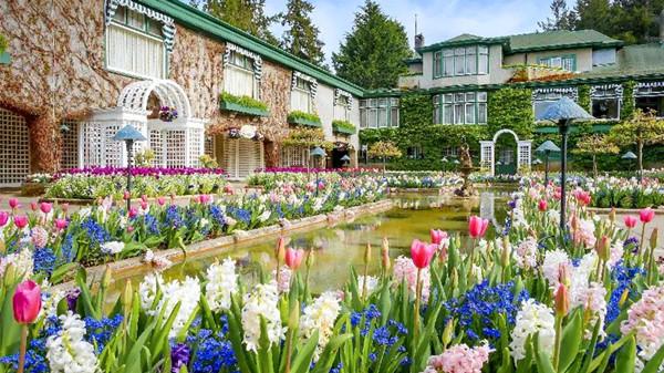 金牛区中高档养老院一暄康养西门分院经验分享,适合春季种植的花草推荐之一:风信子(上)3