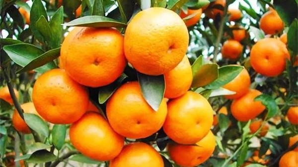 吃对这8种水果,肌肤越变越水润(上)-柑橘