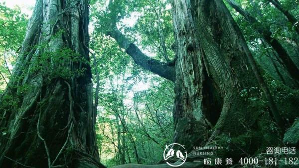 成都旅居养老经验分享:一暄康养为您揭晓负氧离子对人体的五大优点|森林公园