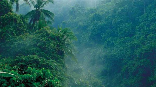 海南木棉湖森林覆盖率高-图1