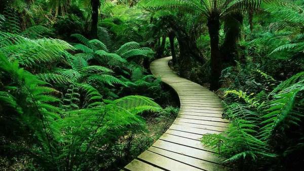 海南木棉湖-森林小路