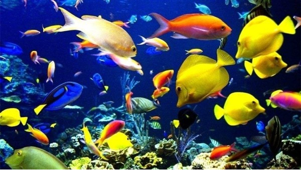 成都好的养老院一暄康养为您揭晓深海鱼的8大营养(三)