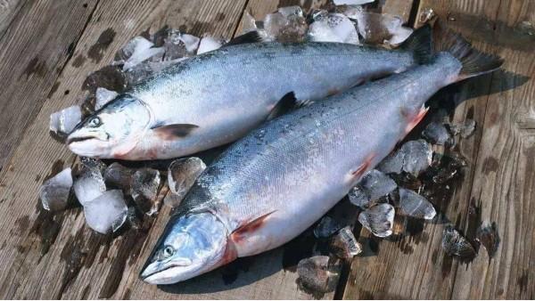 成都好的养老院一暄康养为您揭晓深海鱼的8大营养(四)